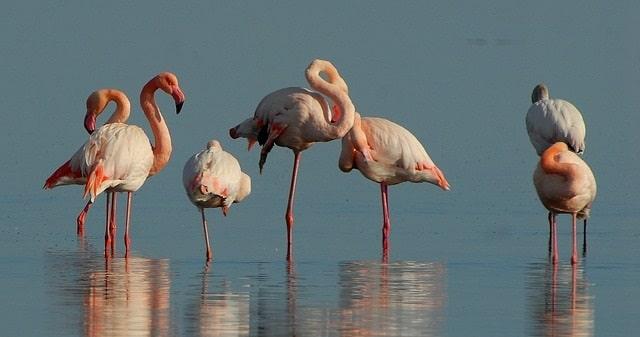 פלמינגו באחד מאגמי דרום אתיופיה
