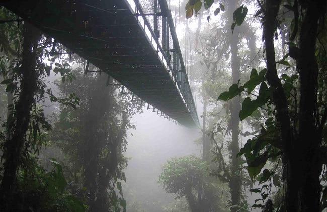 יער עננים