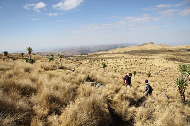 נוף טיפוסי באתיופיה