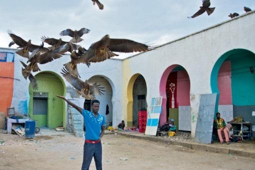 האכלת עופות דורסים בהרר