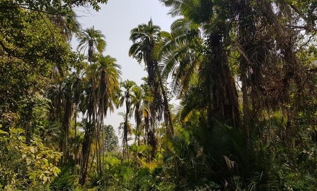 דקלים - העץ הנפוץ בפארק