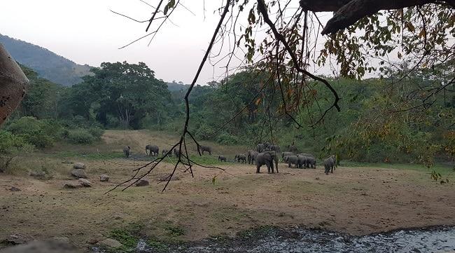 פילים בשמורה