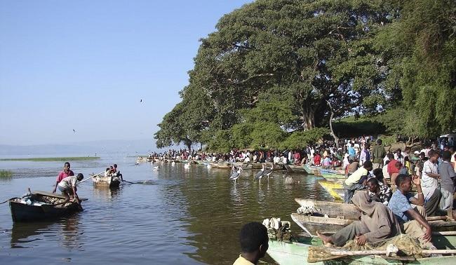 שוק הדגים של אווסה