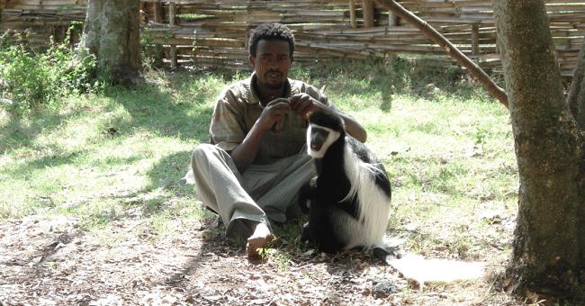קוף מאולף לצד בעליו - מראה נפוץ באוואסה