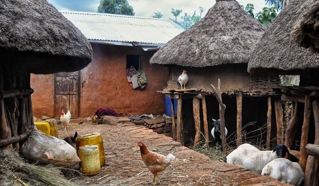 בתים בתוך כפר קונסואי טיפוסי - החיות למטה, האנשים למעלה