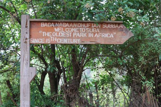 היער הלאומי מנגאשה - Menagesha