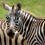 הפארק הלאומי נשיסר– Nechisar