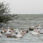 אגם זיוואי (Ziway)