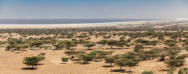 סוואנה טיפוסית באתיופיה