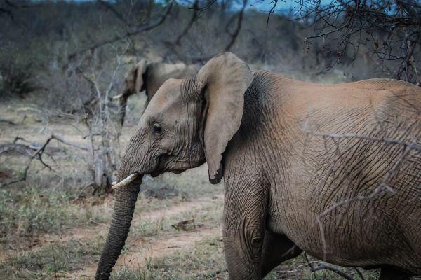 פיל בשמורת הטבע באביל
